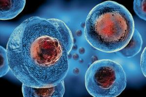 Komórki macierzyste ortopeda Piotrków Bełchatów Niemyjski